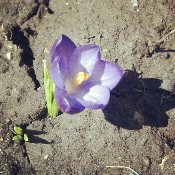 first proof of spring
