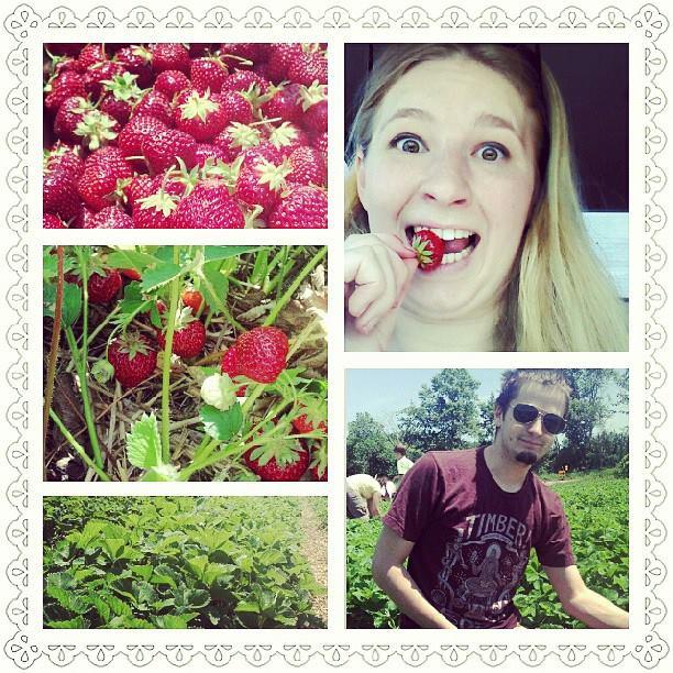 strawberry pickin